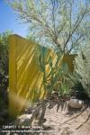 1208121 Cactus, Agave against yellow wall [Agave sp.]. Alan Richards, Tucson, AZ. © Mark Turner