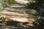 1208140 Sandstone step on gravel path. Alan Richards, Tucson, AZ. © Mark Turner