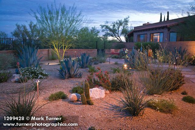 1209428 Stepping Stone Path Through Xeric Garden W/ Pricklypear Cactus,  Rush Milkweed, Agaves, Hummingbird Trumpet, Red Yucca, ...